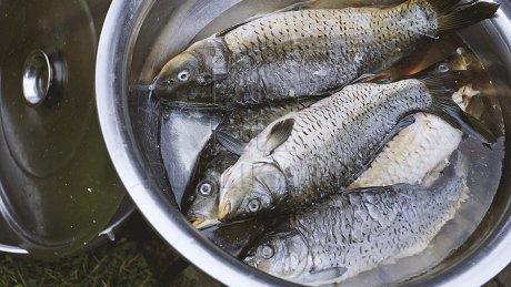 На Гидигиче рыбаки-любители вышли на тонкий лед