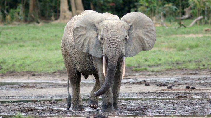 Видео: агрессивный слон напал на туристов