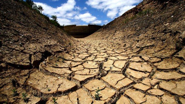 Фермеры ЮАР страдают от сильнейшей за последние 100 лет засухи