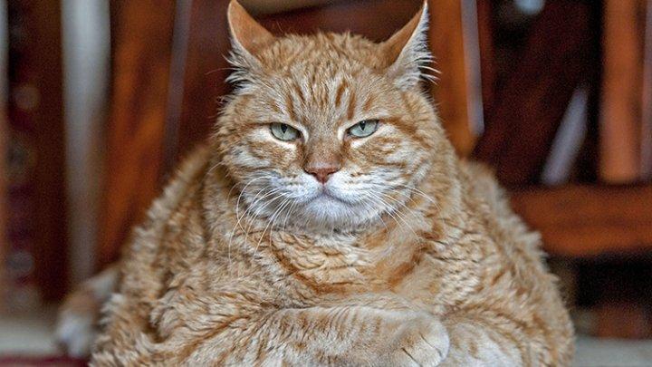 Ученые пояснили, почему кошек исобак ненужно кормить сырым мясом
