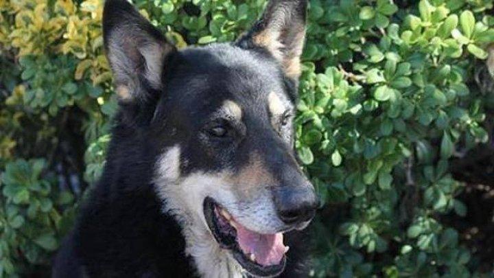 В Аргентине верный пес 10 лет прожил на могиле хозяина и умер там же
