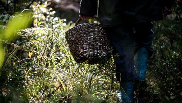 Убивший милиционера петербуржец шесть лет прятался в лесу