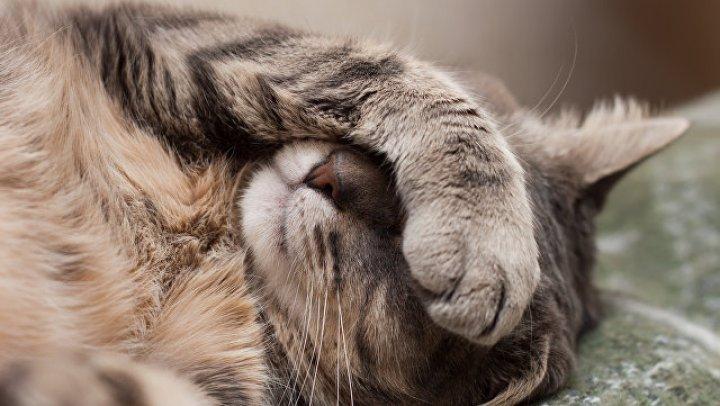Санитарная служба 40 раз приезжала на Даунинг-стрит из-за бездействия кота