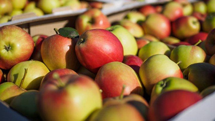 Россия запретила ввоз яблок с нескольких десятков белорусских предприятий