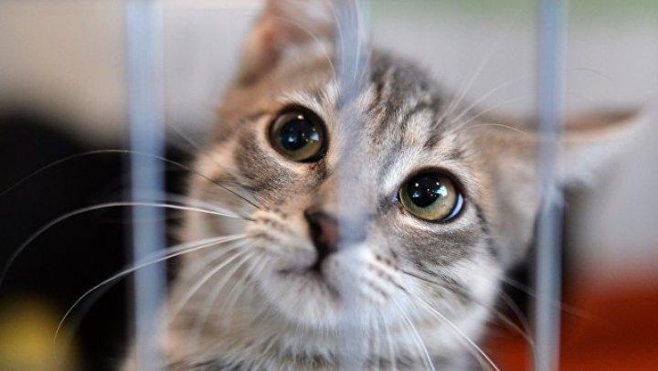 Кошка научилась говорить по-английски, чтобы найти хозяев