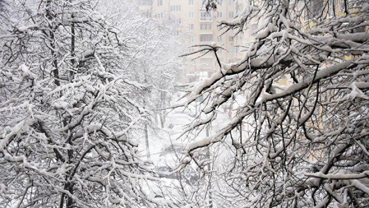 Упавшее в Москве дерево убило человека