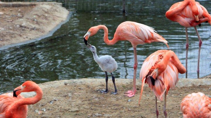 Учёные назвали родину фламинго