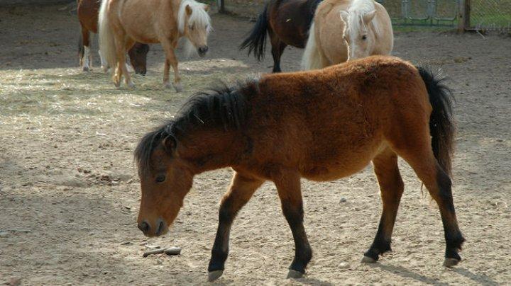 Незрячий британец завел лошадь-поводыря