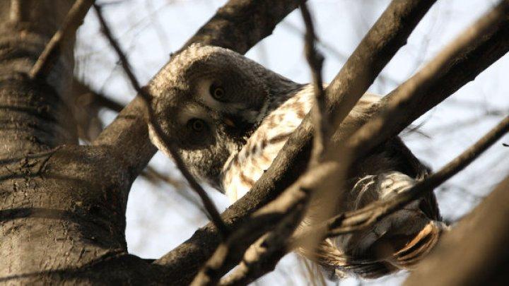 Фотограф ненароком создал загадку с притаившейся в зарослях совой