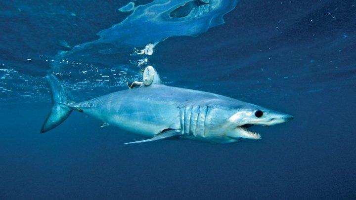 Фото: Рыбак победил акулу, укравшую его добычу