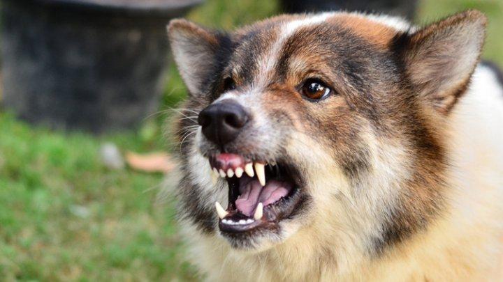Ученые: Собаки чаще кусают тревожных людей