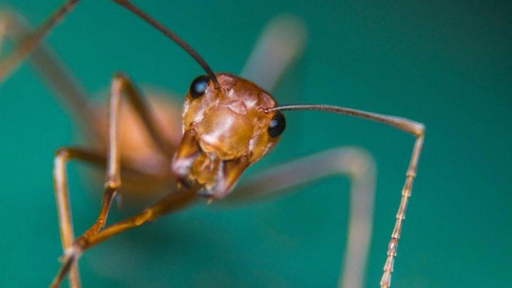 В поисках новых антибиотиков помогут муравьи