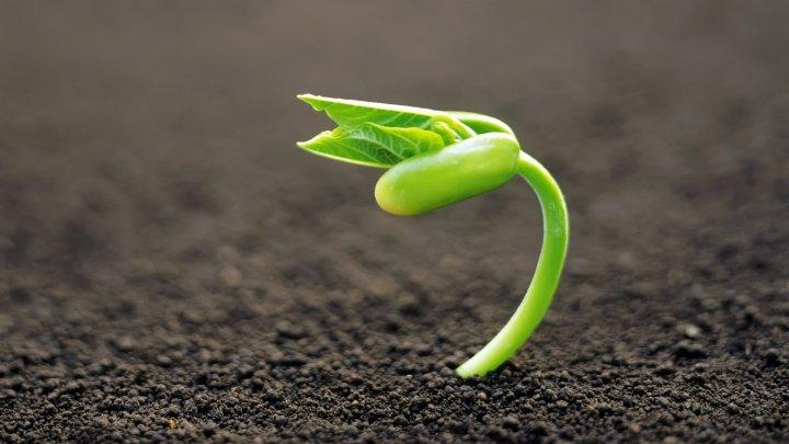 Учёные узнали, когда напланете появились первые растения