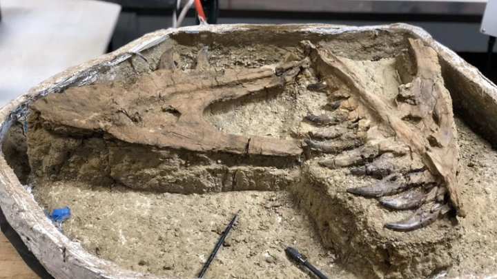 Ученые нашли останки юного тираннозавра