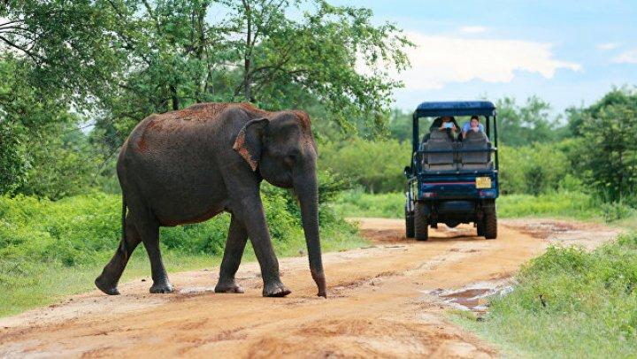 Слон попытался отобрать еду у туристов на Шри-Ланке