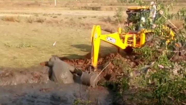 В Индии экскаватор вытащил слоненка из ямы