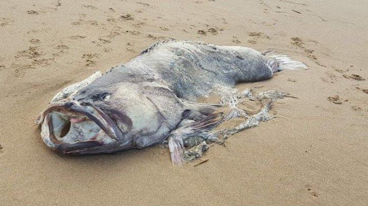 """На пляже в Австралии нашли """"рыбу-монстра"""""""