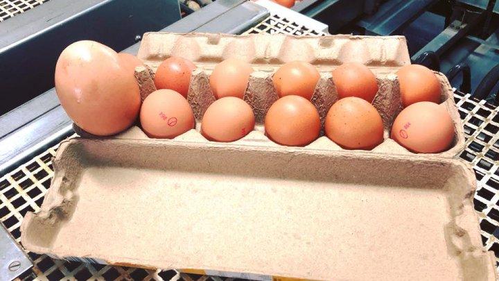 Фермер из Австралии обнаружил куриное яйцо внутри другого яйца