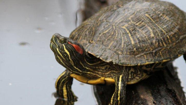 Учитель биологии скормил щенка черепахе на глазах у школьников