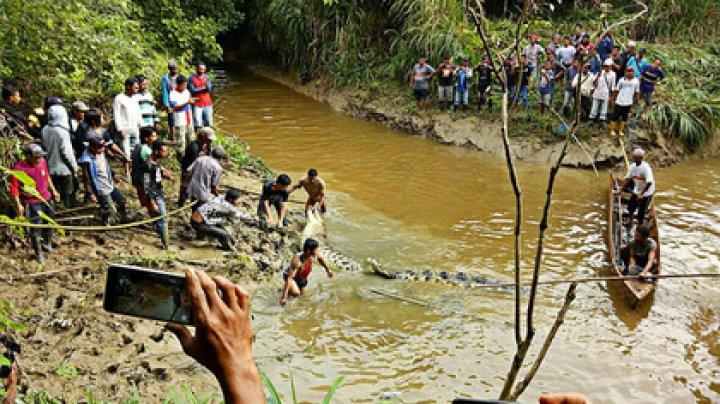 В брюхе шестиметрового крокодила нашли человеческие ноги и руку