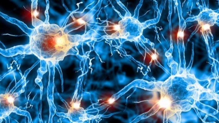 Учёные выяснили, что нервные клетки восстанавливаются