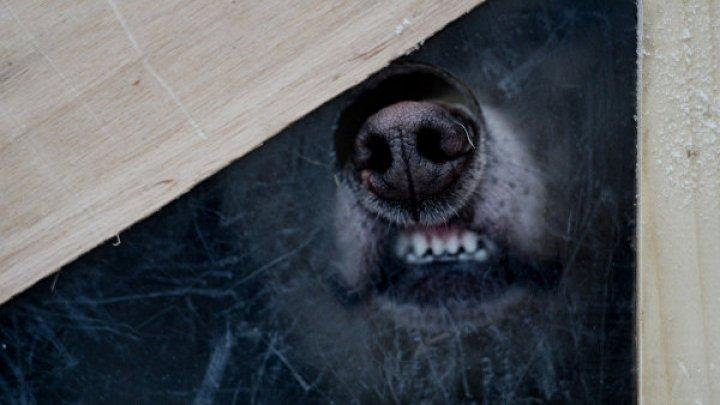 В России стая собак напала на восьмилетнего ребёнка