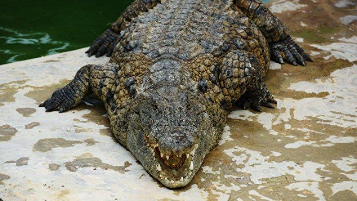 В австралийском зоопарке крокодил проглотил камеру, запись попала в сеть