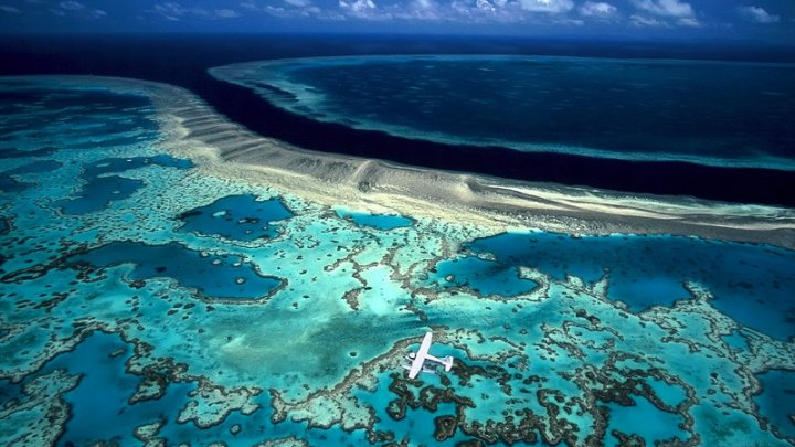 На восстановление Большого Барьерного рифа выделят 380 миллионов долларов