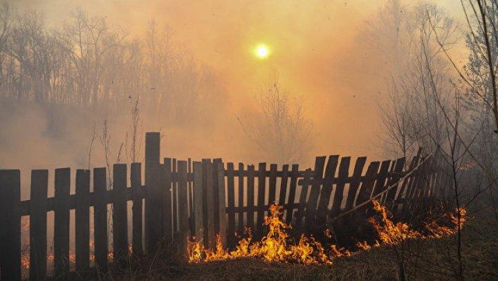 В Приамурье пообещали премию за информацию о виновниках лесных пожаров