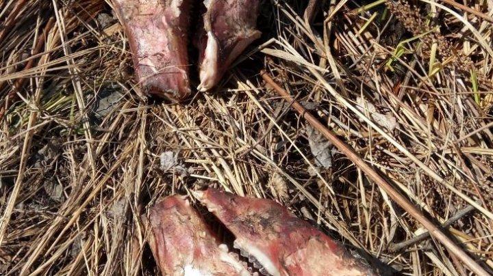 Жуткий пруд с десятками черепов обнаружили в Приморье
