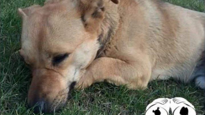 В Одессе умер мужчина, не пережив отравления пса