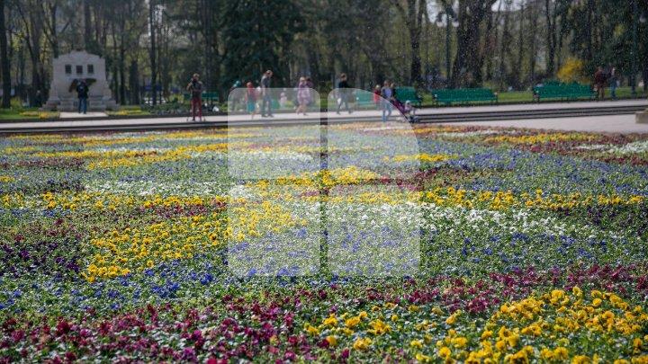 О цветочном ковре в центре столице написали в испанском издании (фото)
