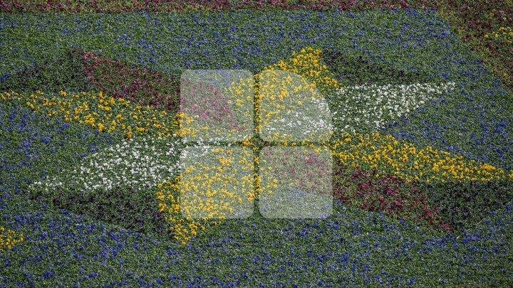 Фиалки из «цветочного ковра» в центре столицы начали пересаживать в другие зоны: фото