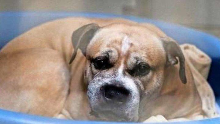 Сотни семей готовы забрать собаку, которая загрызла хозяйку-инвалида и её сына