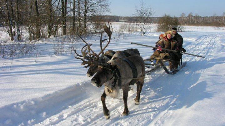 Польские туристы на оленях проехали Якутию, чтобы пожениться