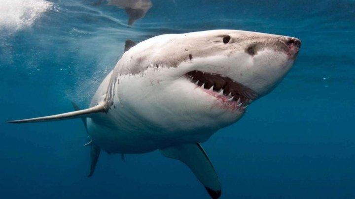 В Таиланде закрыли популярный пляж после нападения акулы на туриста
