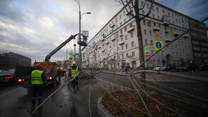 Московский ураган повалил 600 деревьев, повредил 30 домов и 92 машины: фото