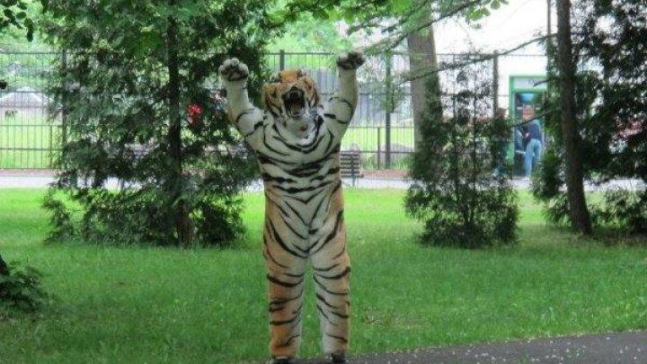 В зоопарке Калининграда сотрудник в плюшевом костюме изображал тигра