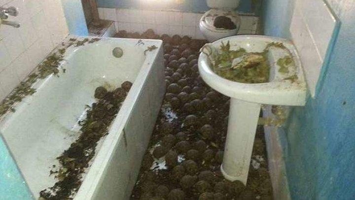 10 тысяч измученных черепах нашли в двухэтажном доме по ужасному запаху