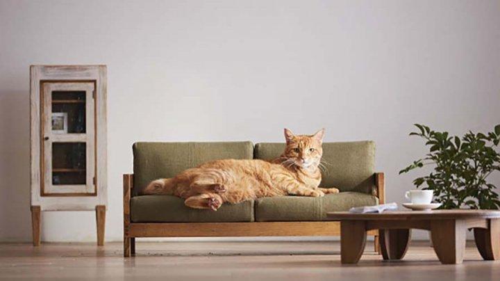 Японцы создали коллекцию мебели для кошек