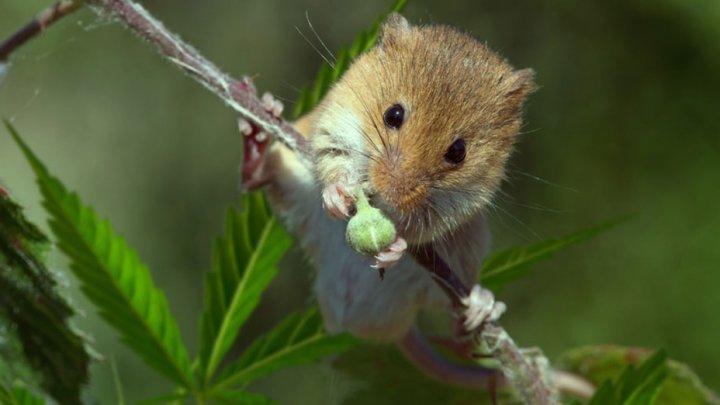 В Аргентине полиция обвинила мышей в пропаже полутонны марихуаны