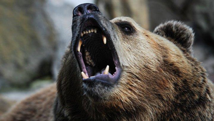 Медведь полакомился мороженым в закусочной и навлек беду на хозяев: видео