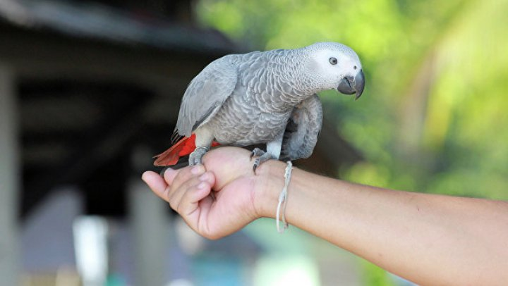 В Германии спор мужчины с попугаем приняли за домашнее насилие