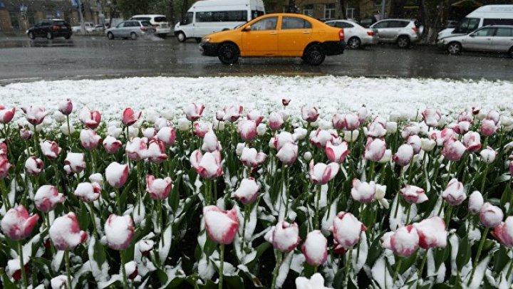 Москвичей предупредили о заморозках в первый день лета