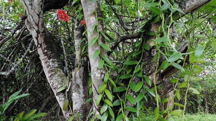 """В Мексике нашли """"вымерший"""" вид кенгуровых прыгунов"""