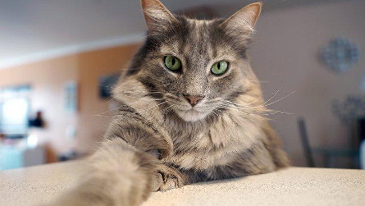 Ученые: аллергия на кошек может уйти в прошлое