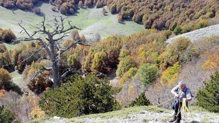 Ученые нашли в Италии самое старое дерево Европы