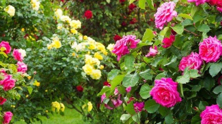 В Китае студентов кормят розами