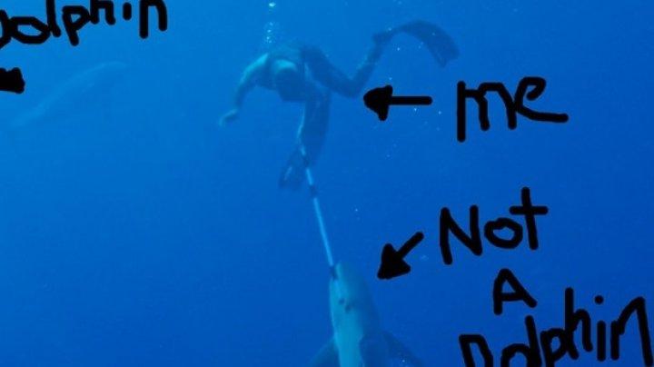 Телеведущий сразился с акулой и снял схватку на фото