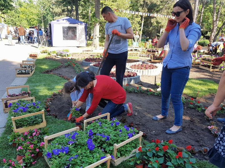 В Кишинёве высадят 12 тысяч цветов, которые купил бизнесмен, откликнувшийся на призыв Сильвии Раду